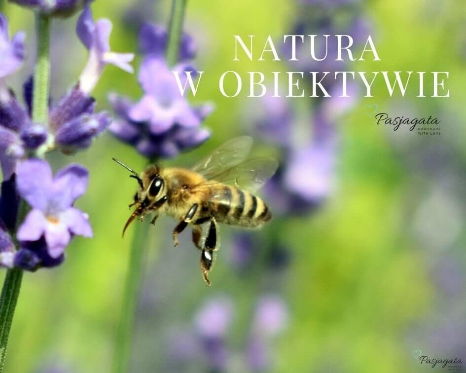 W poszukiwaniu inspiracji w naturze