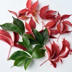 jesienne liście 8